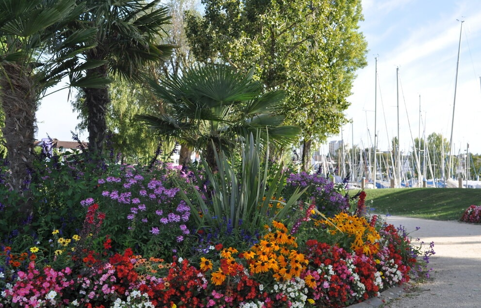 Flowers in a park in Immenstaad am Bodensee